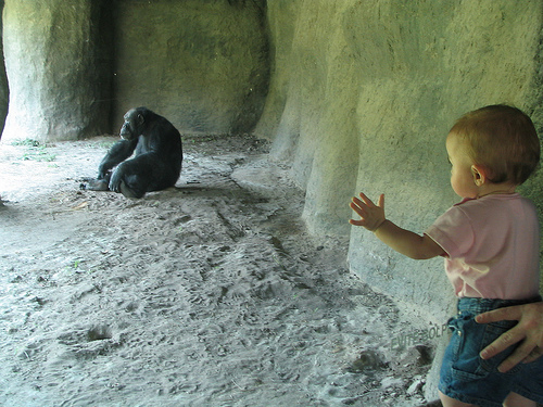 Child and Chimp at Zoo, photo by César Rincón